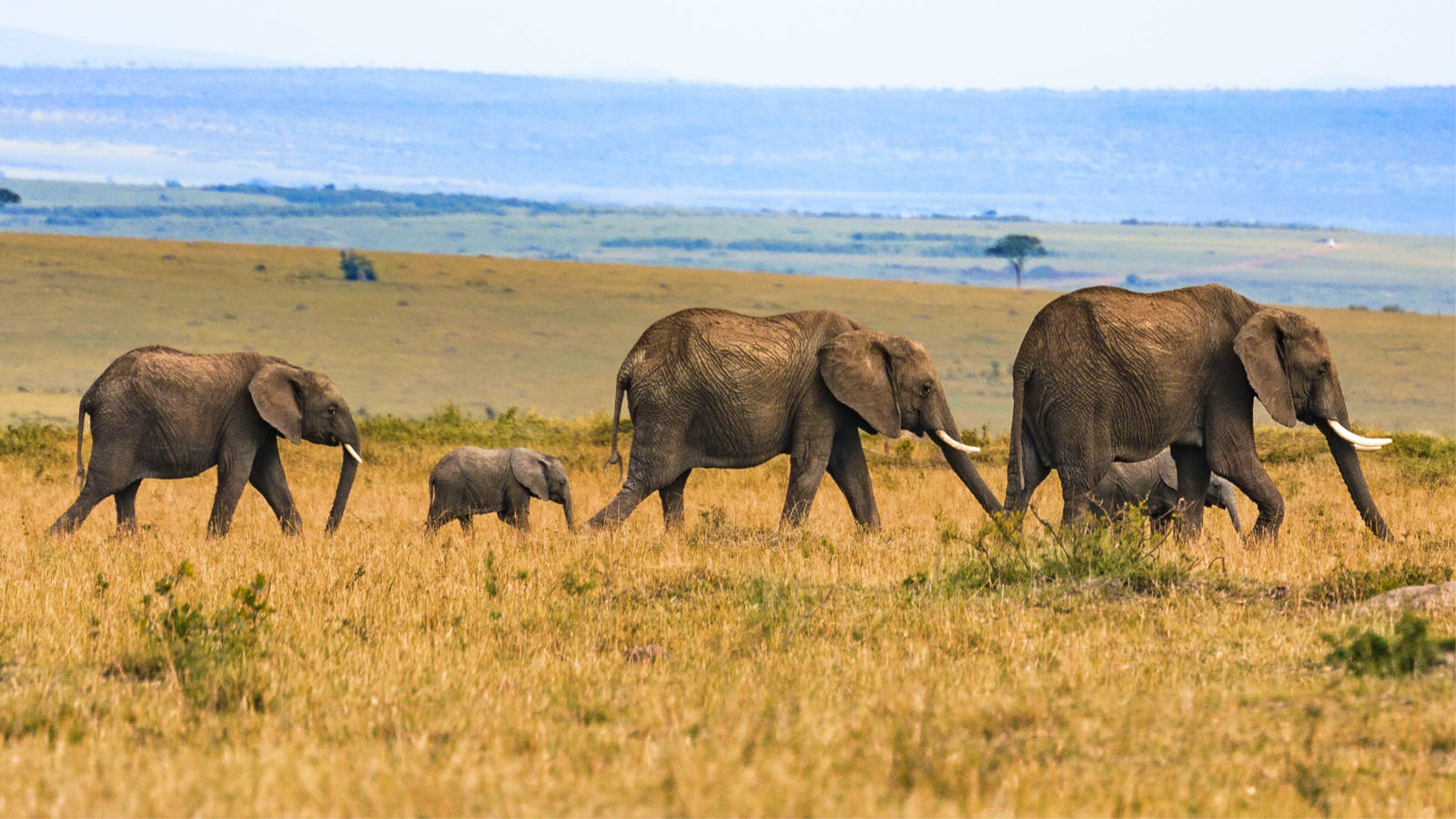 Travel: Self-Drive Safaris